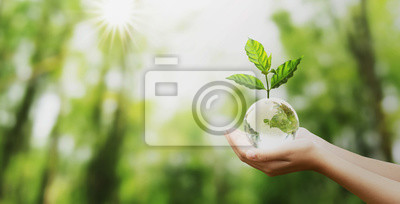 Bild hand holding glass globe ball with tree growing and green nature blur background. eco concept