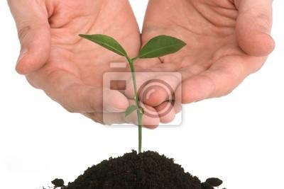 Bild Hand Männer, die eine Pflanze