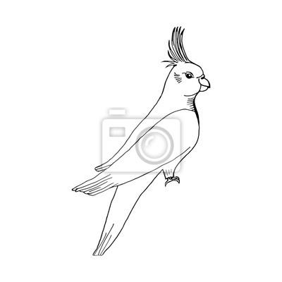 Hand Zeichnen Papagei Skizze Stil Leinwandbilder Bilder Schone