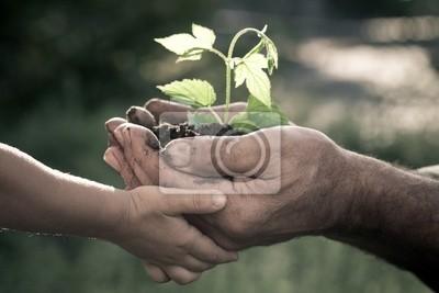 Hands of älterer Mann und Baby hält eine Pflanze