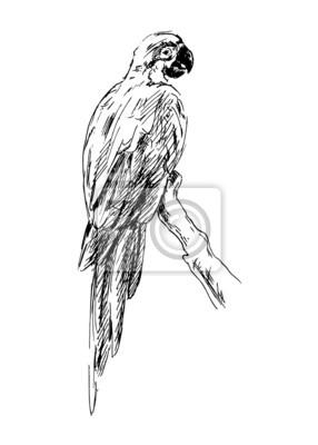 Handzeichnung ein Papagei. Vektor-Illustration