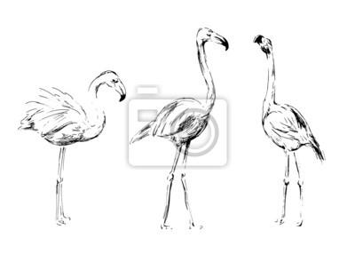 Handzeichnung Flamingos. Vektor-Illustration