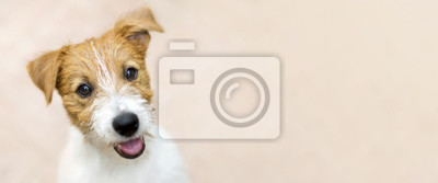 Bild Happy smiling jack russell terrier dog pet puppy - web banner with copy space