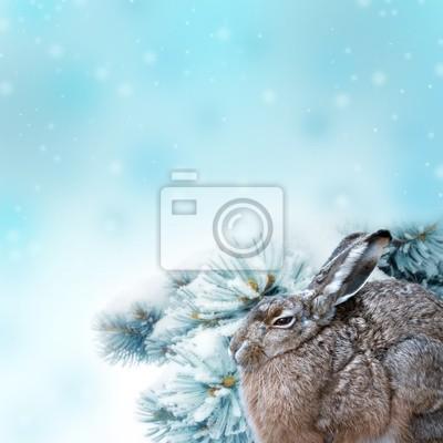 Bild Hase und Winter Hintergrund