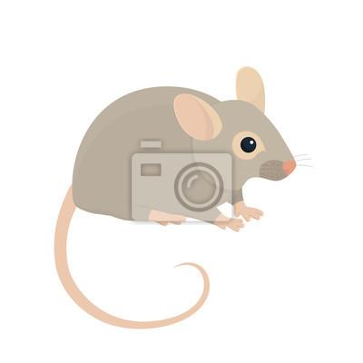 Haus-Maus