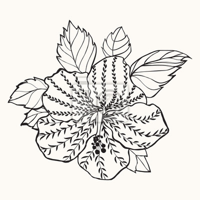 Hawaii hibiskus blume, blatt illustration leinwandbilder • bilder ...