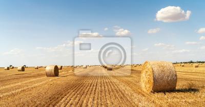 Bild haystacks lie on a field harvesting