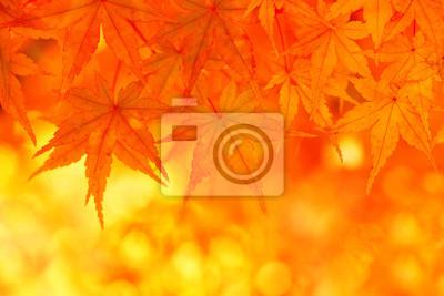 Herbst Ahorn-Blätter