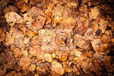 Herbst-Blatt-Hintergrund