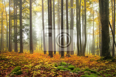 Herbst Farbe Wald