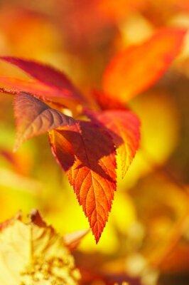 Bild Herbst Hintergrund