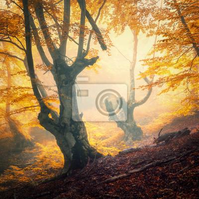 Herbst Wald im Nebel. Bunte Landschaft mit schönen verzauberten Bäumen mit orange und roten Blättern auf den Zweigen. Erstaunliche Szene mit Spur und mystischem Nebelwald. Herbstfarben. Fee Holz Natur