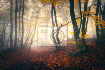 Herbst Wald im Nebel. Herbstwälder. Verzauberter Herbstwald im Nebel am Abend. Alter Baum. Landschaft mit Bäumen, bunten gelben und roten Laub und Nebel. Natur. Mystischer Nebelwald Leuchtende Farben