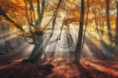 Herbst Wald im Nebel mit Sonnenstrahlen. Magische alte Bäume bei Sonnenaufgang. Bunte Landschaft mit nebligen Wald, gelb Sonnenlicht, orange Laub bei Sonnenaufgang. Feenwald im Herbst. Herbstwälder. V