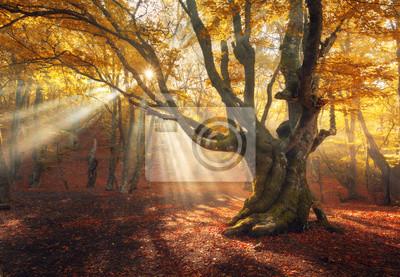 Herbst Wald im Nebel mit Sonnenstrahlen. Magische alten Baum bei Sonnenaufgang. Bunte Landschaft mit nebligen Wald, gelb Sonnenlicht, rotes Laub bei Sonnenaufgang. Feenwald im Herbst. Herbstwälder. Ve
