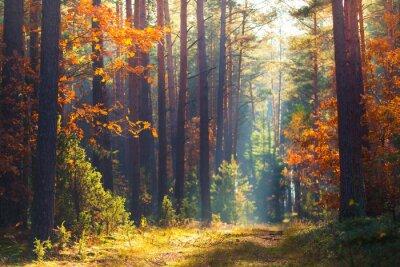 Bild Herbst Wald Szene