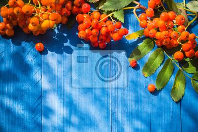 Bild Herbstliche Hintergrund Rowan Obst blauen Holzbrett