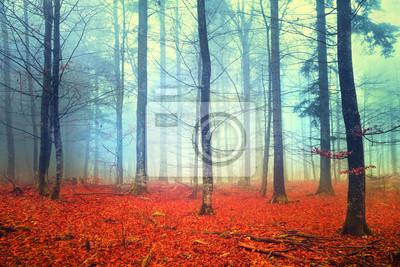 Herbstlicht Wald-Szene