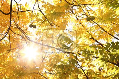 Herbstwaldszene