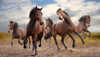 Bild Herde von Pferden