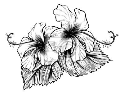 Hibiscus-blumen-weinlese-art-holzschnitt gravierte radierung ...