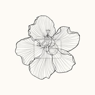Hibiscus blüte draufsicht linienmuster. leinwandbilder • bilder ...