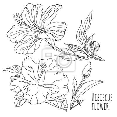 Hibiscus flower.linear handzeichnung. vector schwarz-weiß-bild ...