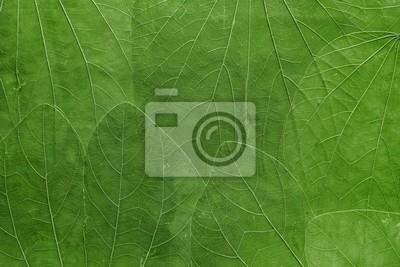 Bild Hintergrund aus Blättern der hellgrünen Farbe