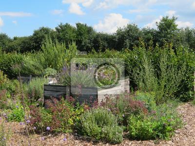 Hochbeet Im Kräutergarten Leinwandbilder Bilder Kräutergarten