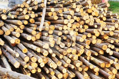 Bild Holz für Gründungspfahl