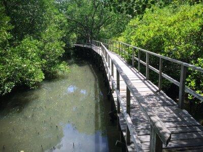 Bild Hölzerne Brücke Auf Riverside