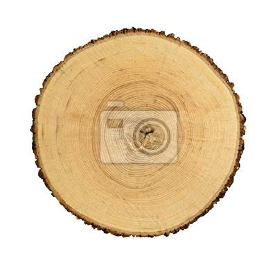 Bild Hölzerner Stumpf auf dem weißen Hintergrund isoliert. Runder Schnitt Baum mit jährlichen Ringen als Holz Textur.