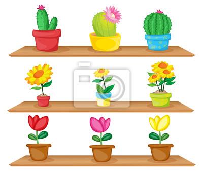 Bild Holzregale mit Zierpflanzen