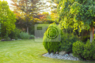 Bild home garden with decorative trees and plants