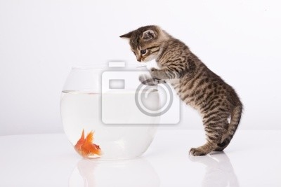 Home Katze und ein Goldfisch