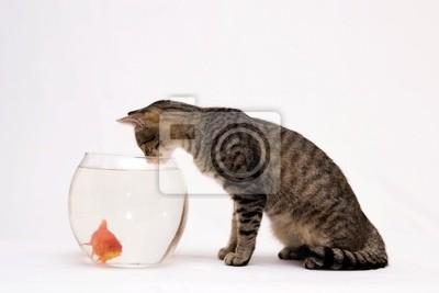Home Katze und ein Goldfisch.