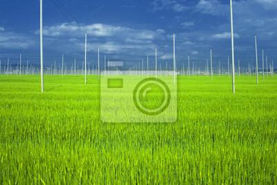 Hopfen Feld mit Weizen