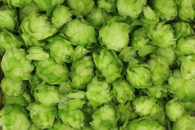 Bild Hopfenzapfen grün abstrakten Hintergrund