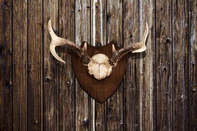 Bild Hörner auf einer Holzwand