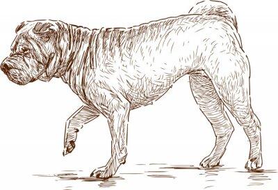Bild Hund auf einem Spaziergang