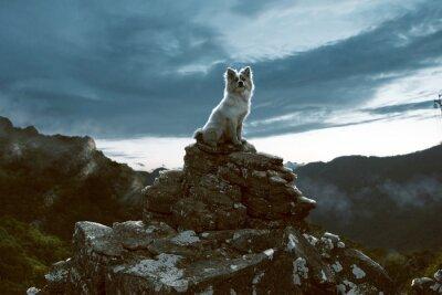 Bild Hund sitzt auf einem Felsen in den Bergen