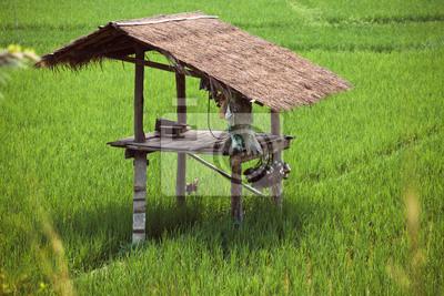 Hütte in einem Reisfeld.