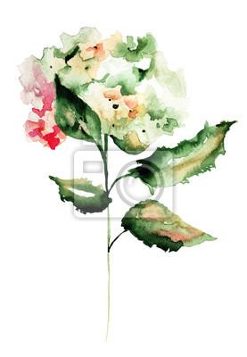 Hydrangea Blumen