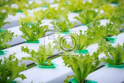 Hydroponische Gemüsefarm