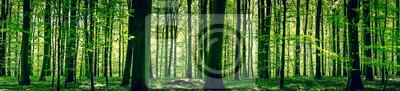 Bild Idyllischen Wald im Frühling
