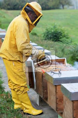 Imker einen Bienenstock raucht
