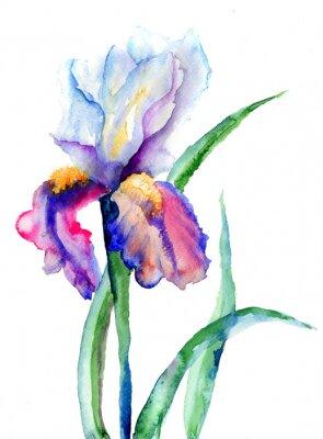 Iris Blumen