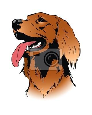 Irish Setter Hund - Vektor-Illustration