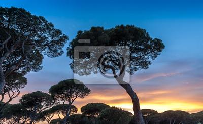 Italienisch Sonnenuntergang auf dem Hintergrund der italienischen Kiefern