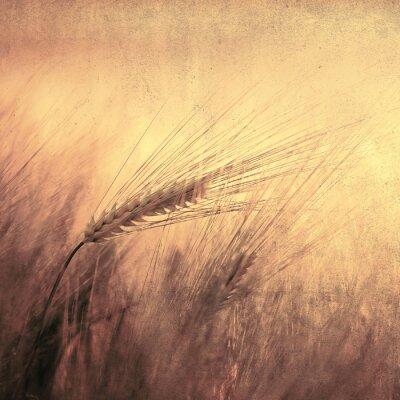 Jahrgang goldenen Weizen